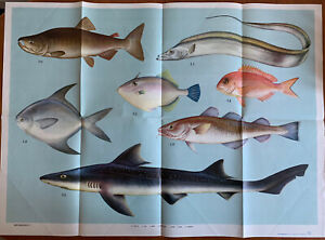 Vintage Chinese Poster - Fish - Large - 1970s / 80s
