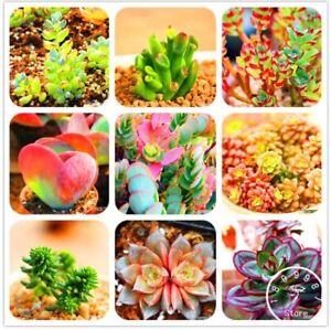 50Pcs/Bag Bonsai Seeds Mix Lithops Rare Succulent Flower Pseudotruncatella