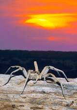Wolf Spider and Solar Eclipse 3D Postcard Lenticular - Greeting Card