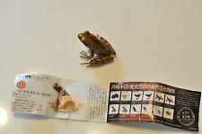 "KAIYODO Capsule museum part.2  no.13b "" Okinawa tip-nosed frog "" brown"