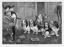 LOUIS WAIN A NEW DOG-FANCY THE BASSETT HOUNDS AND CATS BY LOUIS WAIN DOGS CATS