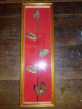 AUTHENTIQUE Ancien Cadre Papillon Taxidermie Entomologie Cabinet de Curiosité