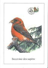 FDC 2918 - Oiseau Buzin sur gravure format A4 !