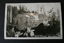 Log Hauler WESTERN WASHINGTON c1910 Vintage RPPC~Real Photo Postcard LOGGING
