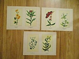3 double floral botanical prints (6 )-1894 framable-Buek-Wildflowers-colorful