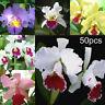 50x Mixed Color Cattleya Seeds Plant Garden Bonsai Ornamental Flower Decor Soft