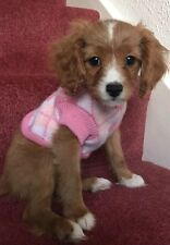 Chihuahua (XS) Pink & White Check Christmas Knitted Dog Jumper Dog Clothes