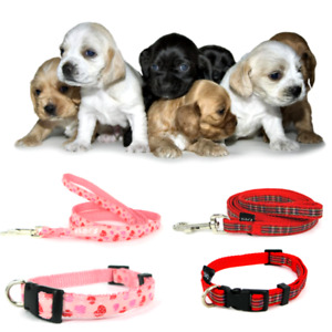 Puppy Dog Collar & Long 125cm Lead Sets Small dogs Nylon Adjustable soft strong