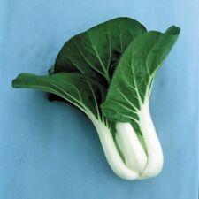 350++ Pak Choi White Stem Cabbage Seeds (Brassica rapa)