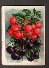 1907 Vintage Chase Nursery Rochester NY~Cherries & Plums a/s Color Illustrations