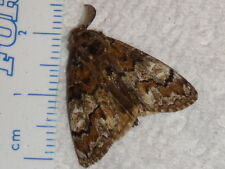 Lepidoptera Unknown Moth Species Florida #3978-80 Insect Butterfly