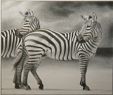 """ Zebra "" photo realistic animal pencil drawing from Hungary"
