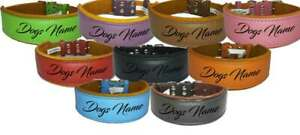 Personalised Leather Staffy Dog Collar Bull Terrier Bulldog Dogs Name Collar