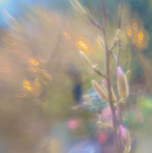 Unique handmade Garden Abstract greeting card with professional print photograph