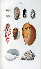 Seashells Poster Nature Marine Reef Sea Shell Antique Repro Print #4