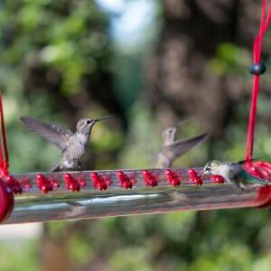2021 New Anna'S Best Hummingbird Feeder With Hole Birds Feeding Transparent Pipe