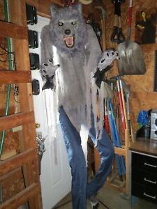 6ft x 6in Towering Werewolf for Halloween prop/display