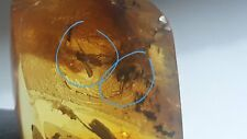 Polished Amber Baltic stones natural 2 insect inclusions 7 gr Midge Mosquito