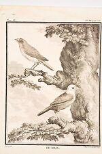 Histoire Naturelle Oiseaux Buffon v 1780 Rousselet-De Sève le MAIA