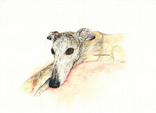 Whippet greyhound dogLurcher IG Watercolour/ink Painting By Bridgette Lee