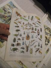 Ancienne Gravure Pédagogique d'Encyclopédie Les Insectes