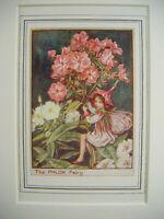 Vintage FLOWER FAIRIES PRINT & MOUNT The Phlox Fairy CICELY MARY BARKER c1930's