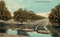DB Postcard CA D589 Irrigated Orchard California Cancel 1914 Citrus Oranges