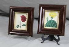 2x altkolorierter Kupferstich B. Maund  Dahlia Superflua + Opuntia vulgaris /265