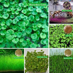 Aquarium Aquatic Seeds Garden Water Grass Plant Fish Tank Landscaping Easy Grow