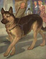 Antique GERMAN SHEPHERD Print Wesley Dennis Illustration Dog Wall Art 3572-D