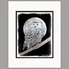 Snowy Owl Original Art Print 8x10 Matted to 11x14