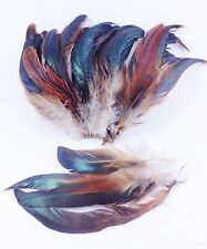 "25+ NATURAL HALF BRONZE GINGER SCHLAPPEN ROOSTER CRAFT FEATHERS 6""L-7""L"