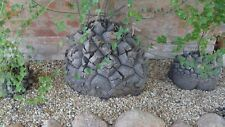 Dioscorea Elephantipes (5-250 FRESH SEEDS - Nov 2020) Caudex Succulent Cactus
