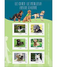france 2016 assistance dog hunde perros Golden Retriever Border Collie Flat ms