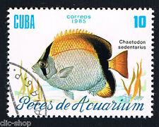 FLORA E FAUNA 1 FRANCOBOLLO PESCI KUBA CHAETODON SEDENTARIUS 1985 timbrato