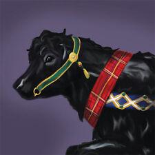 Scottish Beltie Belted Galloway Carousel Cow 7X10 Print