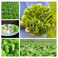 100 Seeds/Pack Lettuce Seeds Leaf Salad Lolla Biondi Organic Green Vegetables