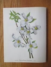 Set of 12 Vintage Walcott Wildflower Prints - Azelea, Silverberry etc. 8/1