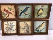 Vintage Retro PH Gonner Wood Framed Bird Prints Lot Of 6 Circa 1950's