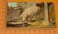 CHROMO BON-POINT IMAGE ECOLE Gaufré 1890-1910 ANIMAUX COCHON