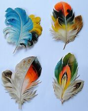 ViCTORIAN SCRAPS c.1880s 4 Beautiful FEATHERS each 8 X 6 cms approx.