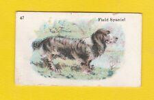 DOGS  -  B.A.T.  CO.  LTD.  -  SCARCE  DOG  CARD  -  FIELD  SPANIEL  -  1913