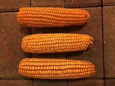 Ear Corn For Birds, Wildlife, Pets & Crafts 24 Ears