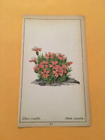 KS) 1878 Botanique Pratique Silene Acaulis Flower Botany Original Colored Print