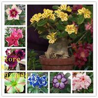 5Particles / lot High germination rate Desert rose seeds Flower Pot Planters Gar
