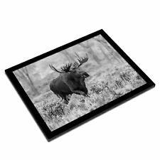 A3 Glass Frame BW - Wild Moose in Natural Wilderness  #37583