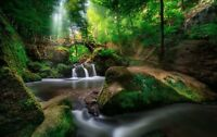 Green Forest Waterfall - Bridge Landscape Large Poster / Canvas Picture Prints