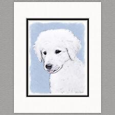Kuvasz Puppy Original Art Print 8x10 Matted to 11x14