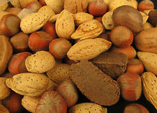 2.5 Pounds Mixed Nuts in Shell Pecans, Almonds, Brazil Nuts, Hazelnuts & Walnuts