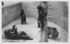 BR56397 bern barengraben Bears ours Animaux animals